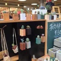 多肉植物とサボテン(川西市 アートマーケット)