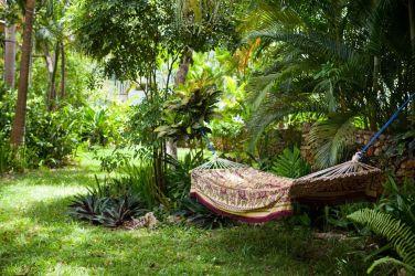 IIC Sosua School Garden IMG4413_ST
