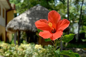 You learn Spanish in Sosua at IIC in the midst of a tropical garden.