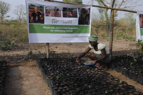 Reforesting Ghana with Click A Tree 044