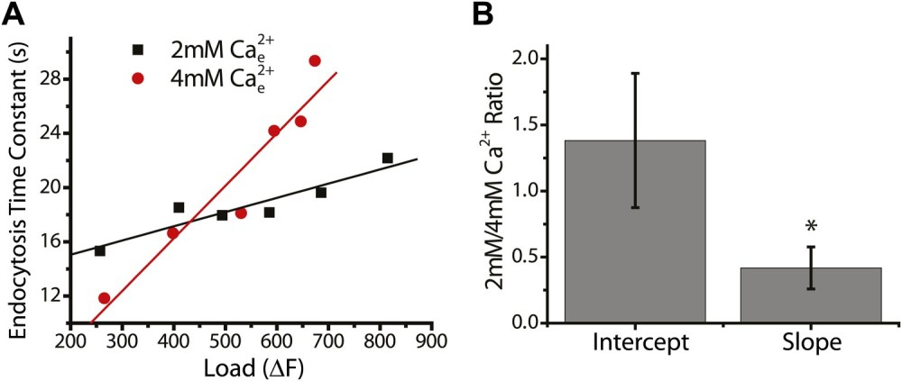 medium resolution of comparing the effects of 2 mm and 4 mm external ca2 on the slopes of endocytosis corrected for changes in exocytosis