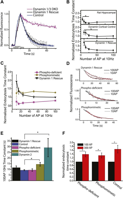 medium resolution of dephosphin control of endocytic acceleration