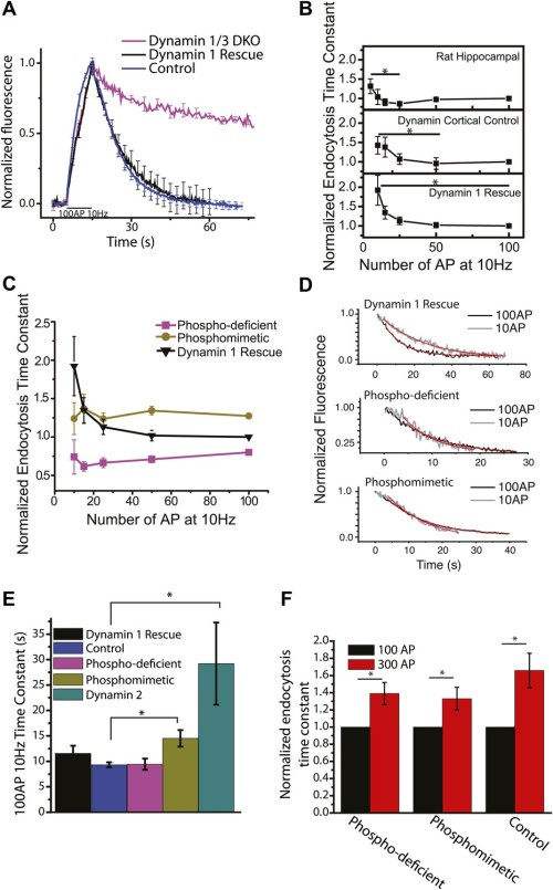 small resolution of dephosphin control of endocytic acceleration