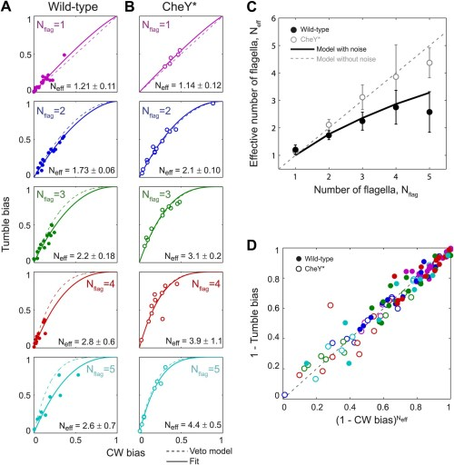 small resolution of wild type behavior matches the veto model for cells with a lower effective number of flagella