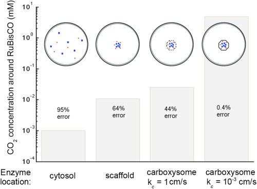 small resolution of concentration of co2 achieved through various cellular organizations of enzymes where we have selected the hco 3 transport level such that the hco 3