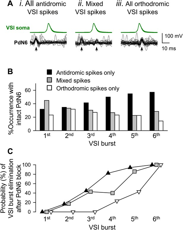 Figures and data in Hidden synaptic differences in a