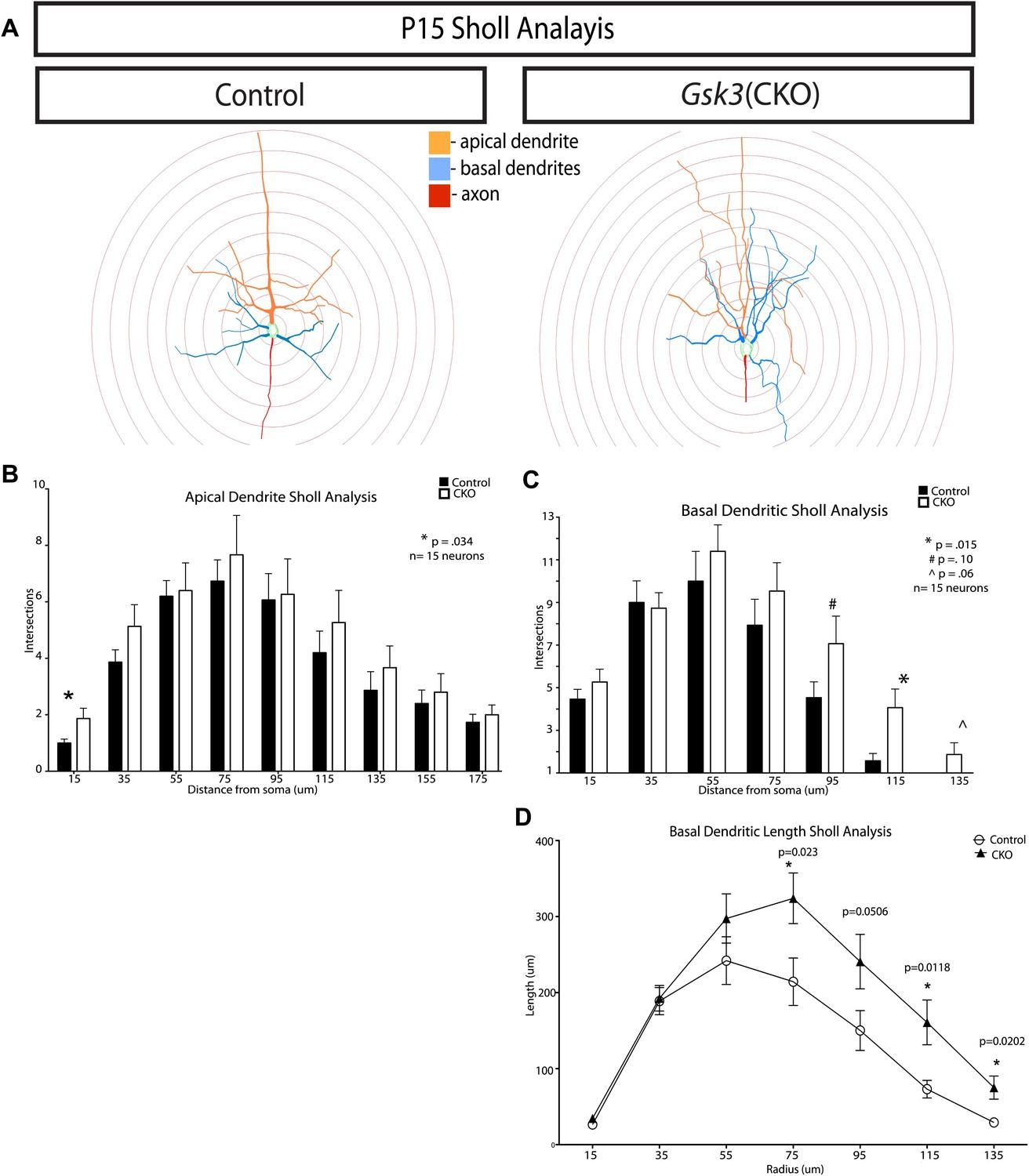 Figures and data in GSK-3 signaling in developing cortical