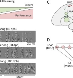 probing the neural mechanisms underlying the regulation of motor variability in songbirds  [ 1500 x 831 Pixel ]