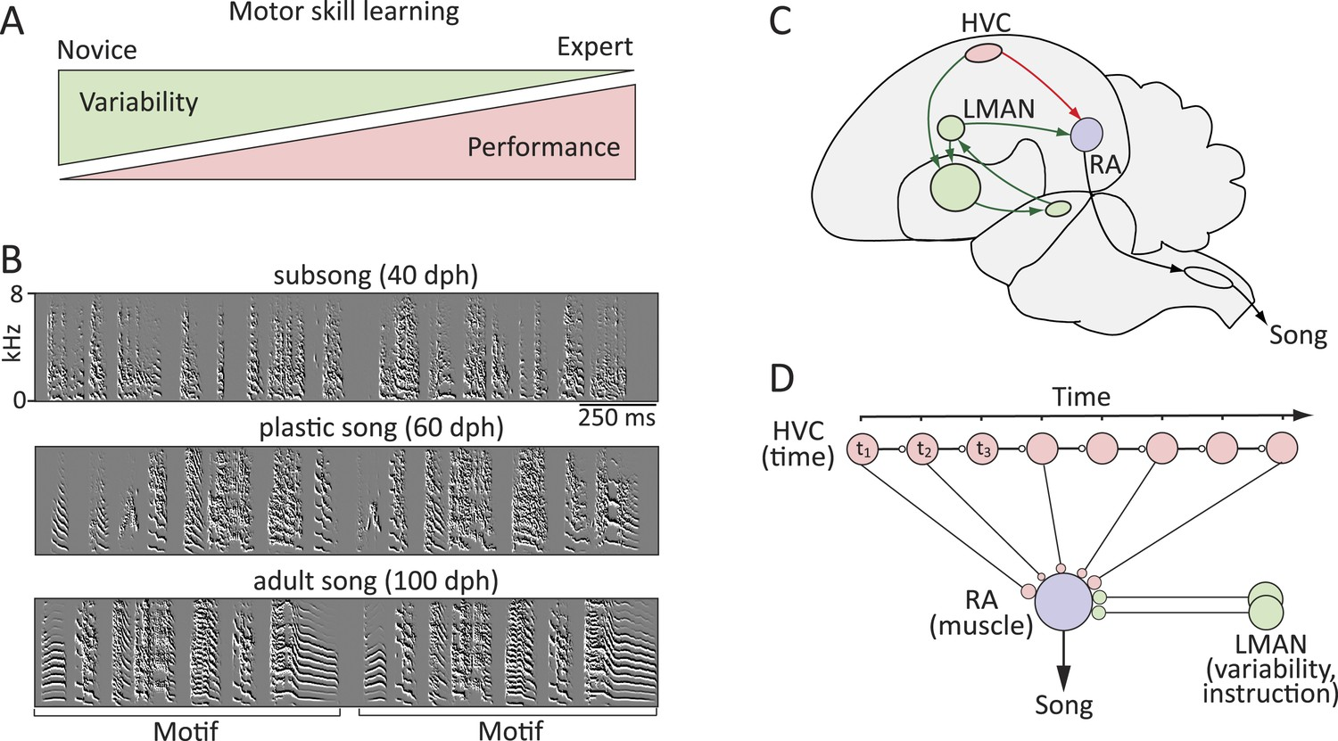 hight resolution of probing the neural mechanisms underlying the regulation of motor variability in songbirds