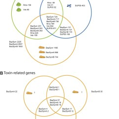 Compare And Contrast Mass Weight Venn Diagram Diagramming Sentences Worksheets 5th Grade Abundant Toxin Related Genes In The Genomes Of Beneficial Symbionts Shared Between Bathymodiolus Vesicomyid Sox Free Living Sup05
