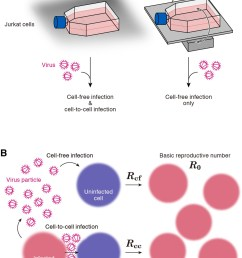 cell culture systems and the basic reproduction number under cell to cell and cell free infection  [ 1204 x 1500 Pixel ]