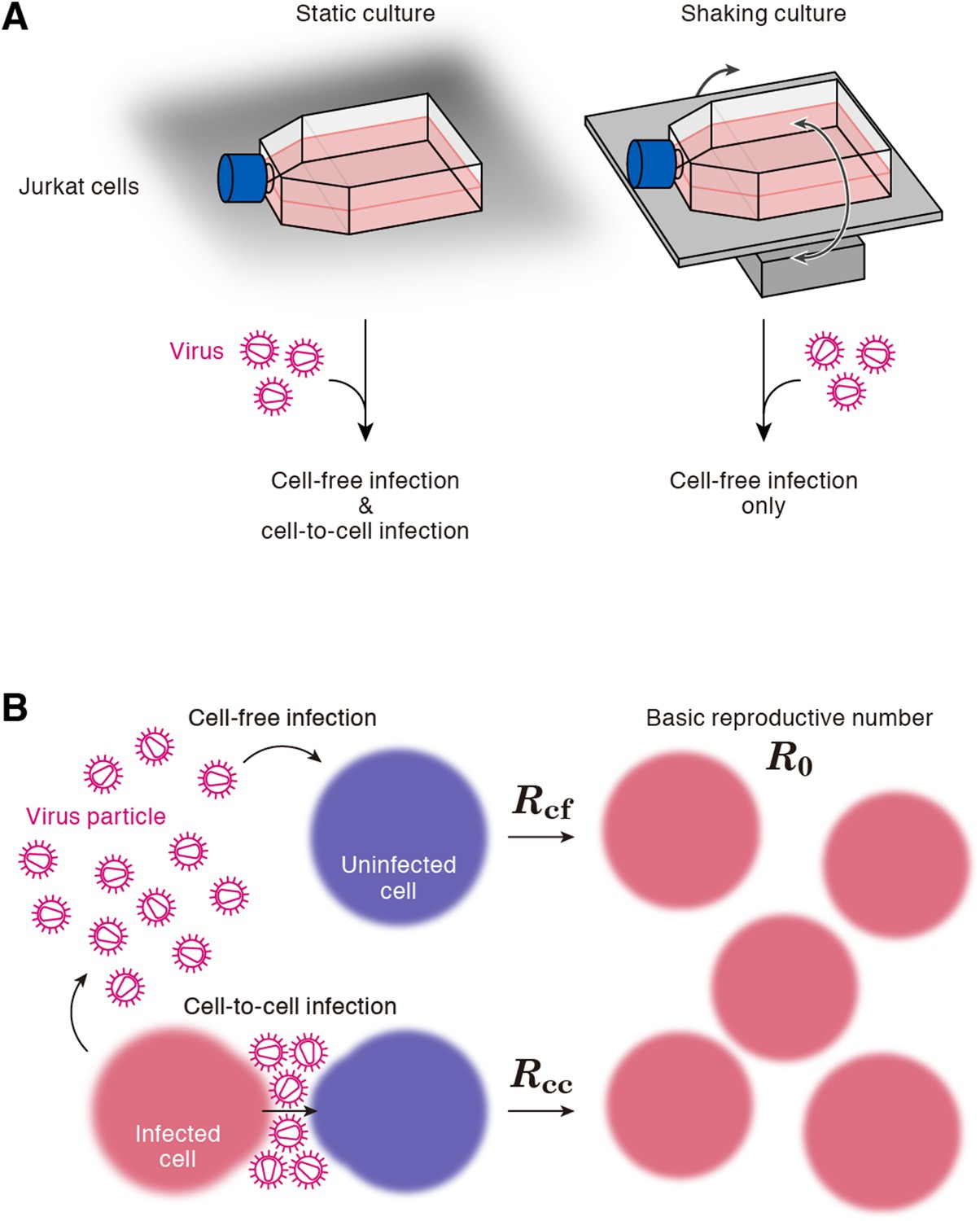 hight resolution of cell culture systems and the basic reproduction number under cell to cell and cell free infection