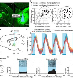 targeted stimulation of central thalamus evokes positive bold changes and increases in neuronal firing at the site of stimulation  [ 1500 x 1011 Pixel ]