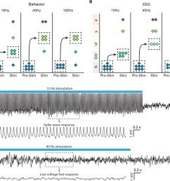 optogenetic stimulation of central thalamus in asleep animals modulates brain state in a frequency dependent manner  [ 1500 x 1244 Pixel ]