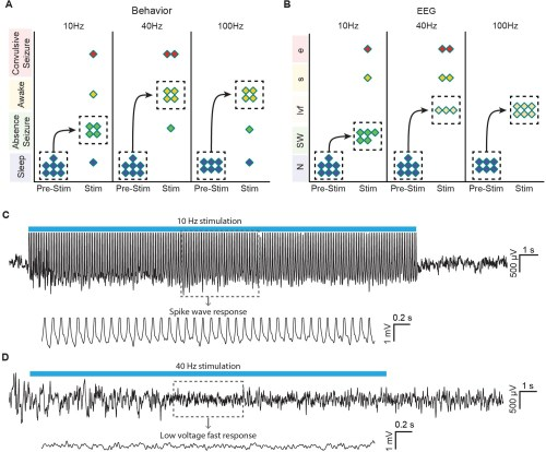small resolution of optogenetic stimulation of central thalamus in asleep animals modulates brain state in a frequency dependent manner