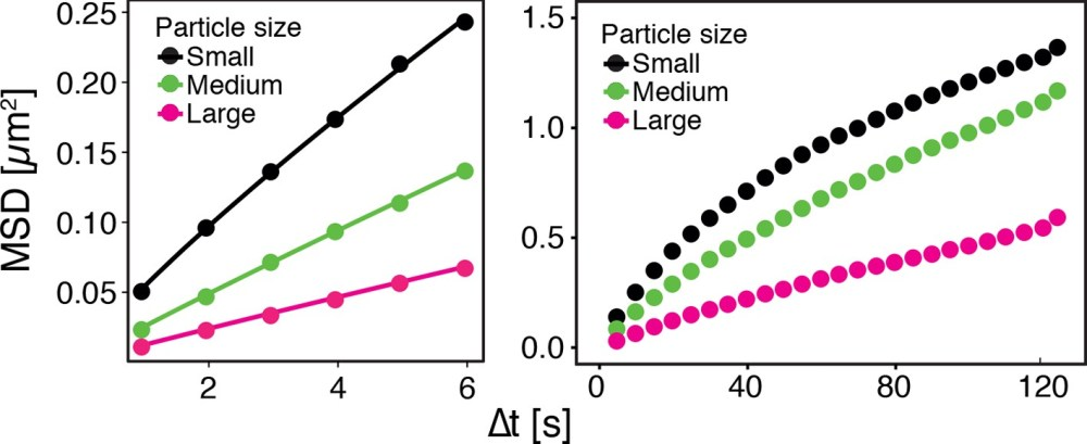 medium resolution of gfp ns particles show size dependent msd over short left and long right observation times