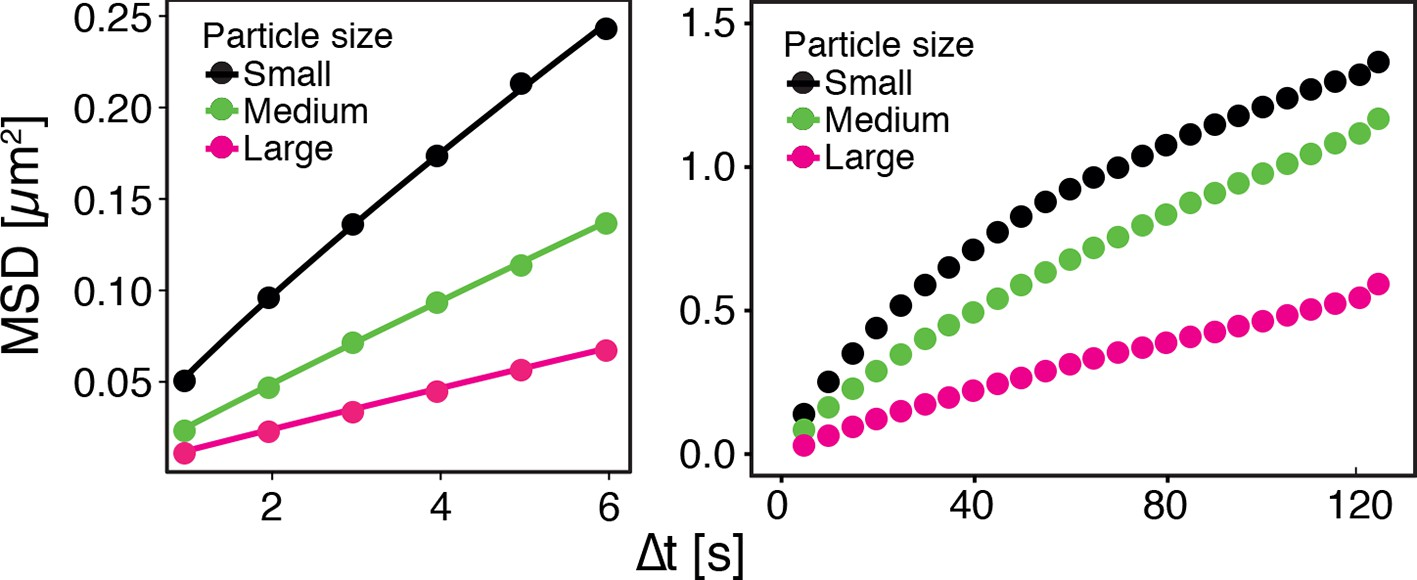 hight resolution of gfp ns particles show size dependent msd over short left and long right observation times