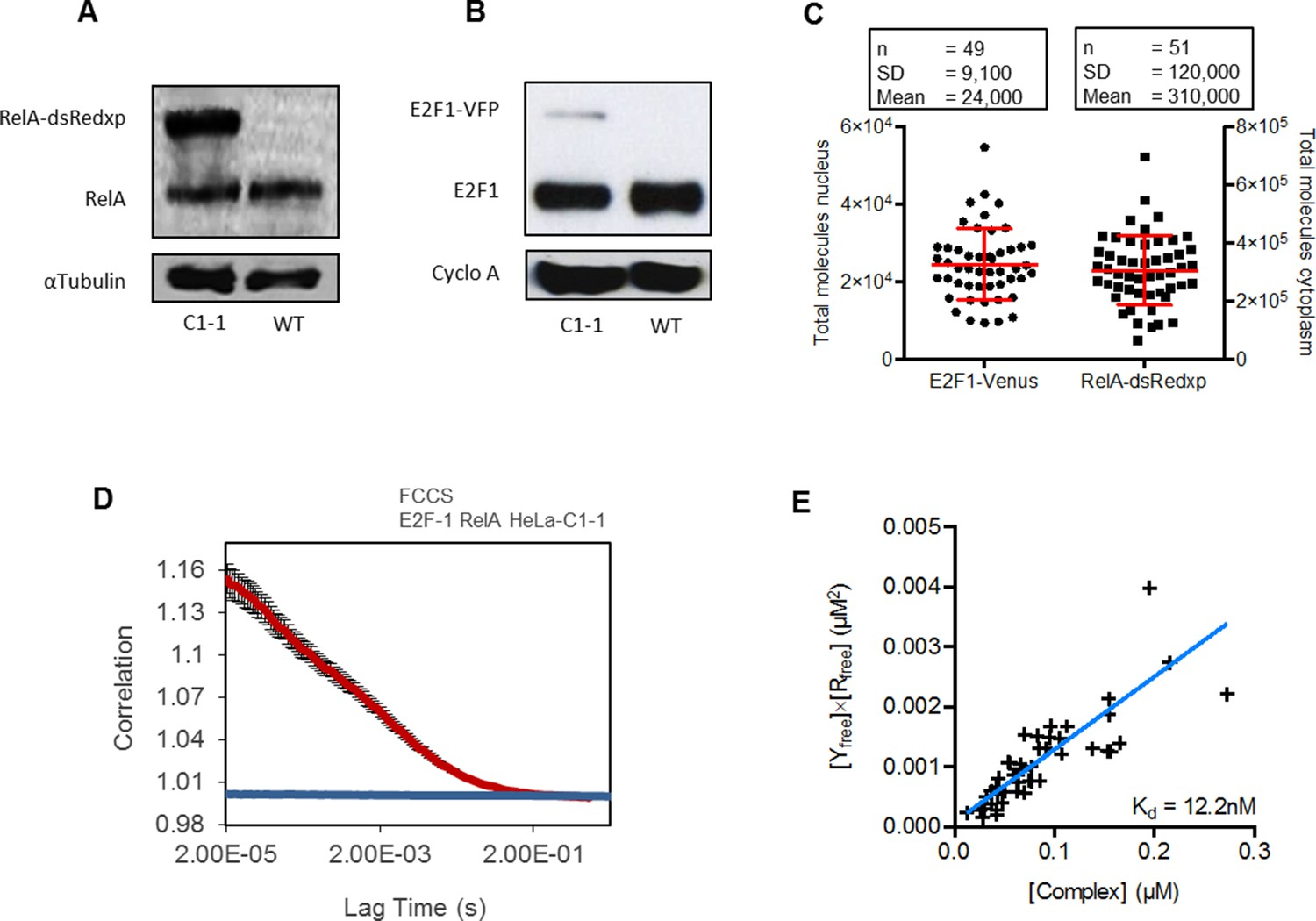 Figures and data in Dynamic NF-κB and E2F interactions