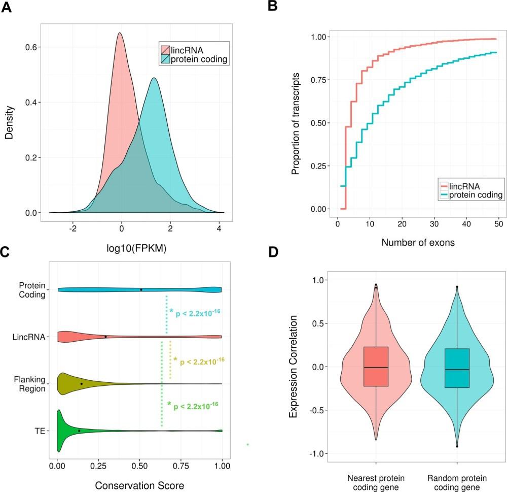 medium resolution of properties of identified scn lincrnas