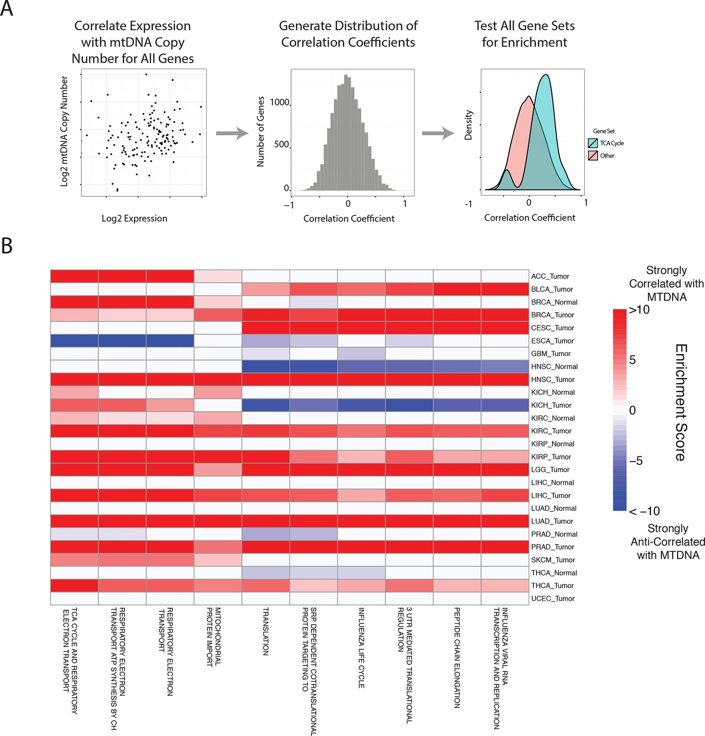 Mitochondrial Dna Copy Number Variation Across Human