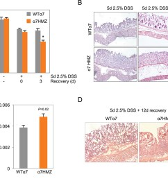 increased susceptibility of 7hmz mice to dss induced colitis  [ 1500 x 1247 Pixel ]