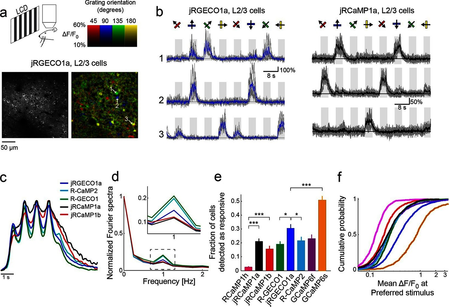 hight resolution of jrgeco1a and jrcamp1a and jrcamp1b performance in the mouse primary visual cortex