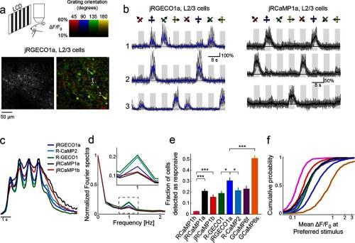 small resolution of jrgeco1a and jrcamp1a and jrcamp1b performance in the mouse primary visual cortex