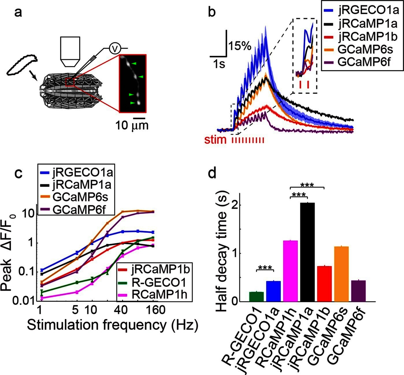 hight resolution of imaging activity in drosophila larval nmj boutouns with red gecis