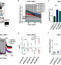imaging activity in the c elegans ash and awc neurons with red gecis  [ 1500 x 1192 Pixel ]