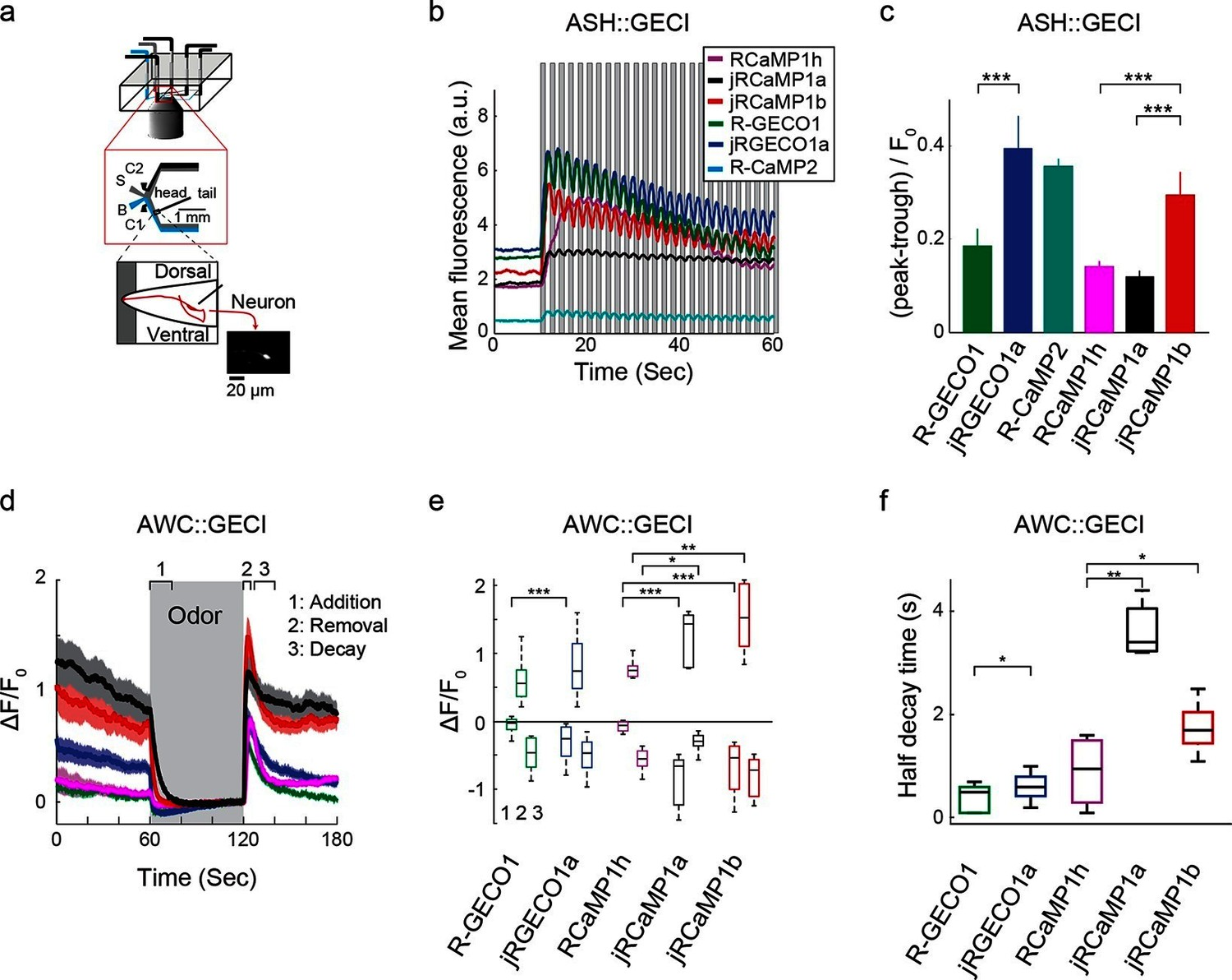 hight resolution of imaging activity in the c elegans ash and awc neurons with red gecis