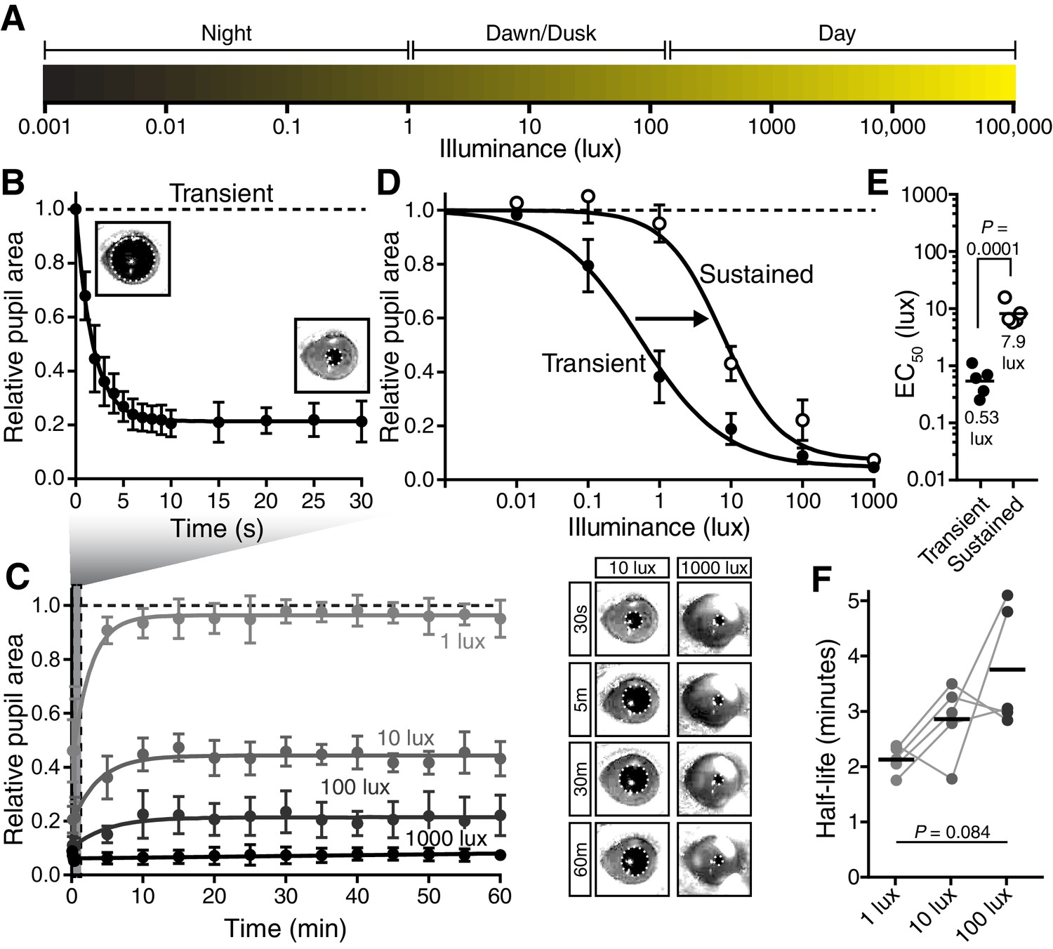 A visual circuit uses complementary mechanisms to support