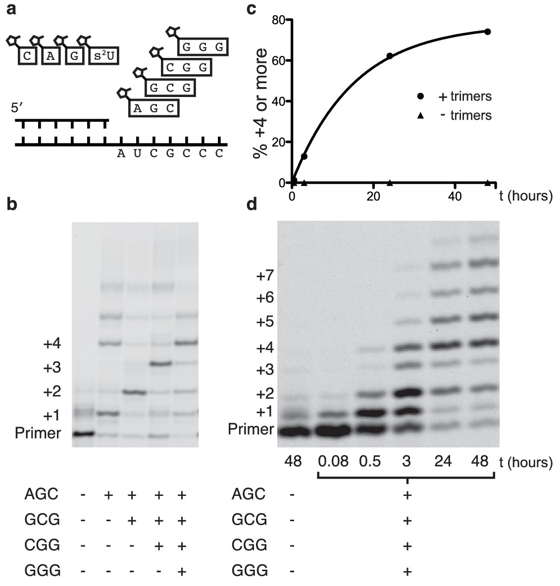 Nonenzymatic Copying Of Rna Templates Containing All Four Letters Is Catalyzed By Activated