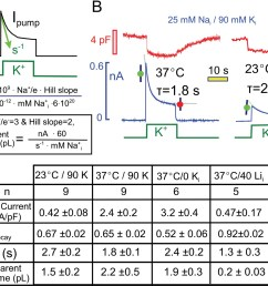 quantitative analysis of pump current decay in relation to predictions for cytoplasmic na depletion  [ 1500 x 1202 Pixel ]