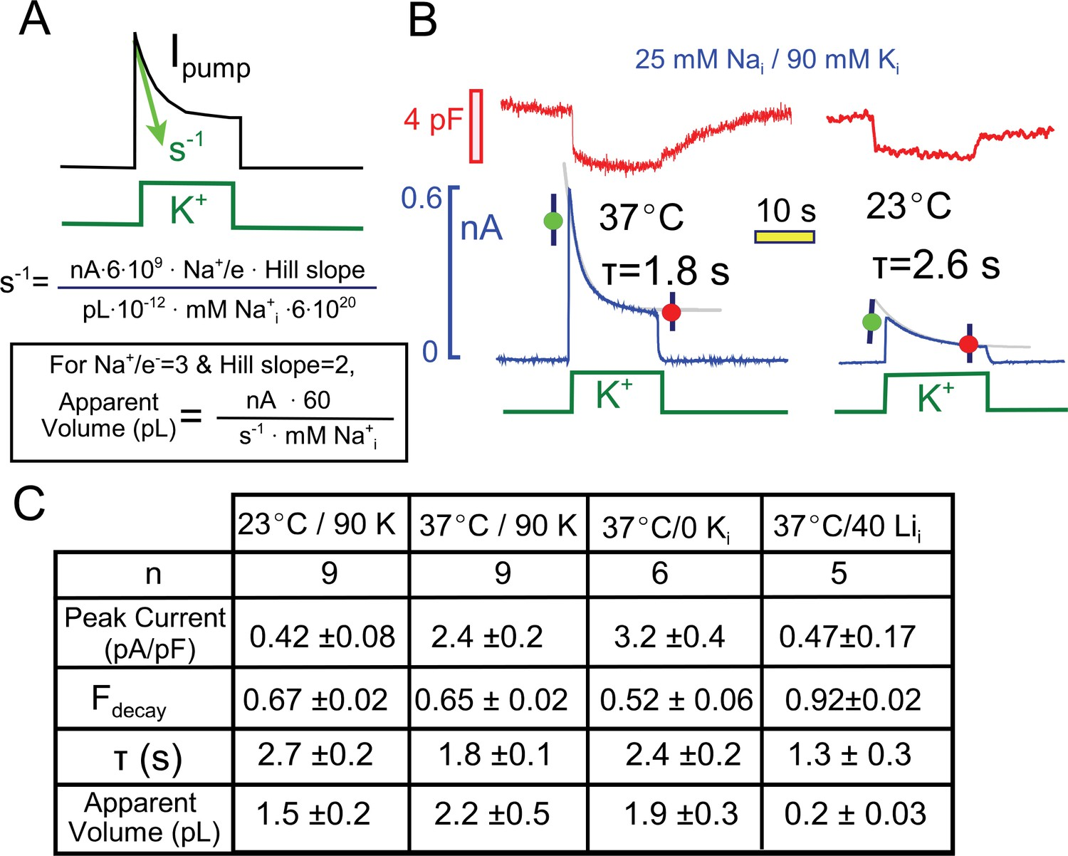 hight resolution of quantitative analysis of pump current decay in relation to predictions for cytoplasmic na depletion