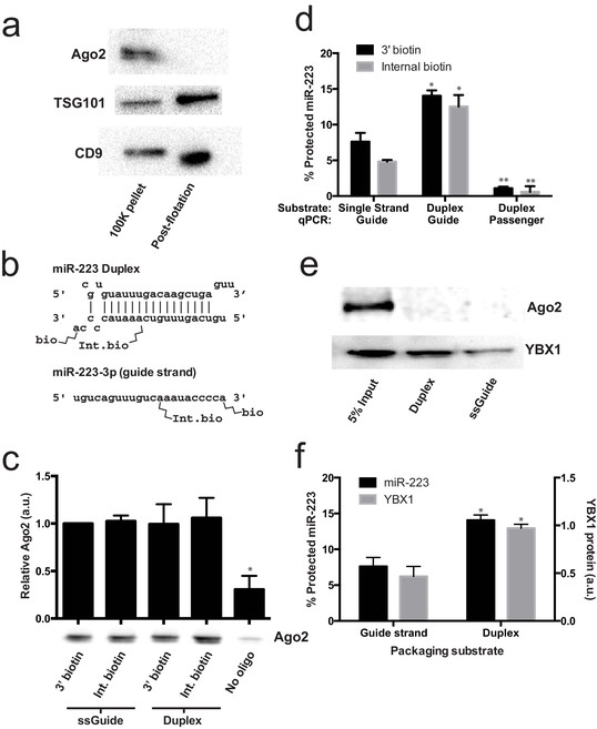 Y-box protein 1 is required to sort microRNAs into