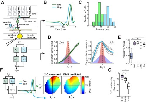 small resolution of the divisive suppression divs model of synaptic currents
