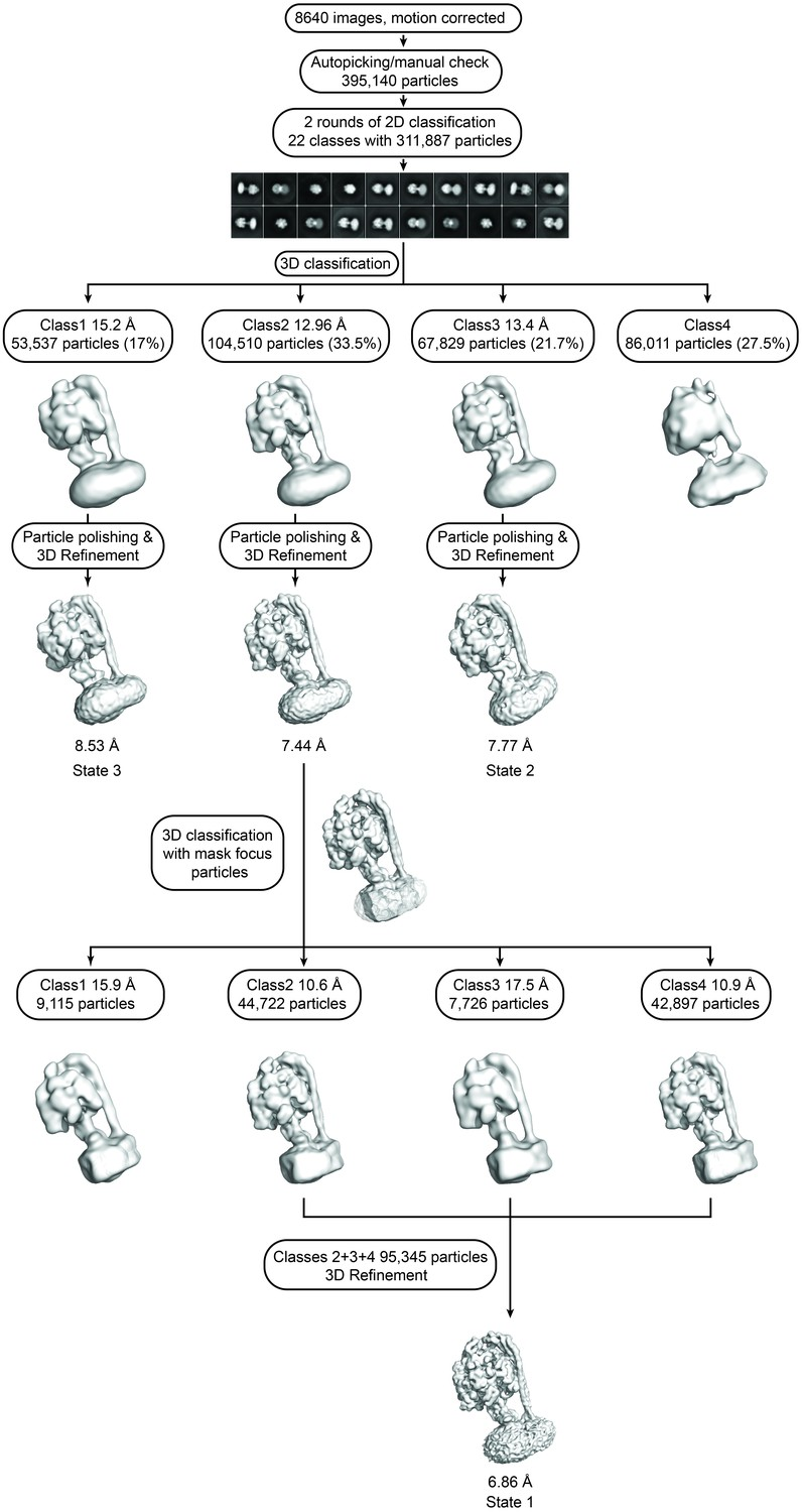 Figures and data in Cryo-EM structures of the