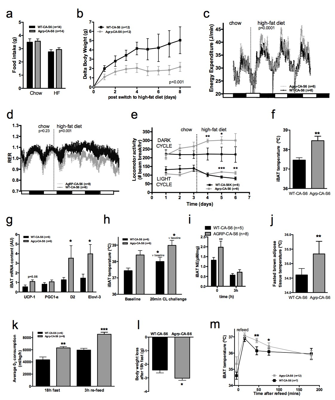 Mtorc1 In Agrp Neurons Integrates Exteroceptive And Interoceptive Food Related Cues In The