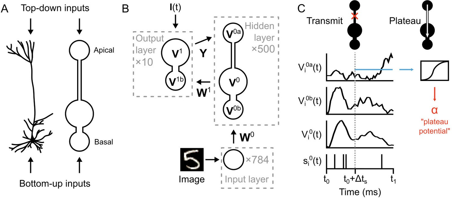 Figures and data in Towards deep learning with segregated