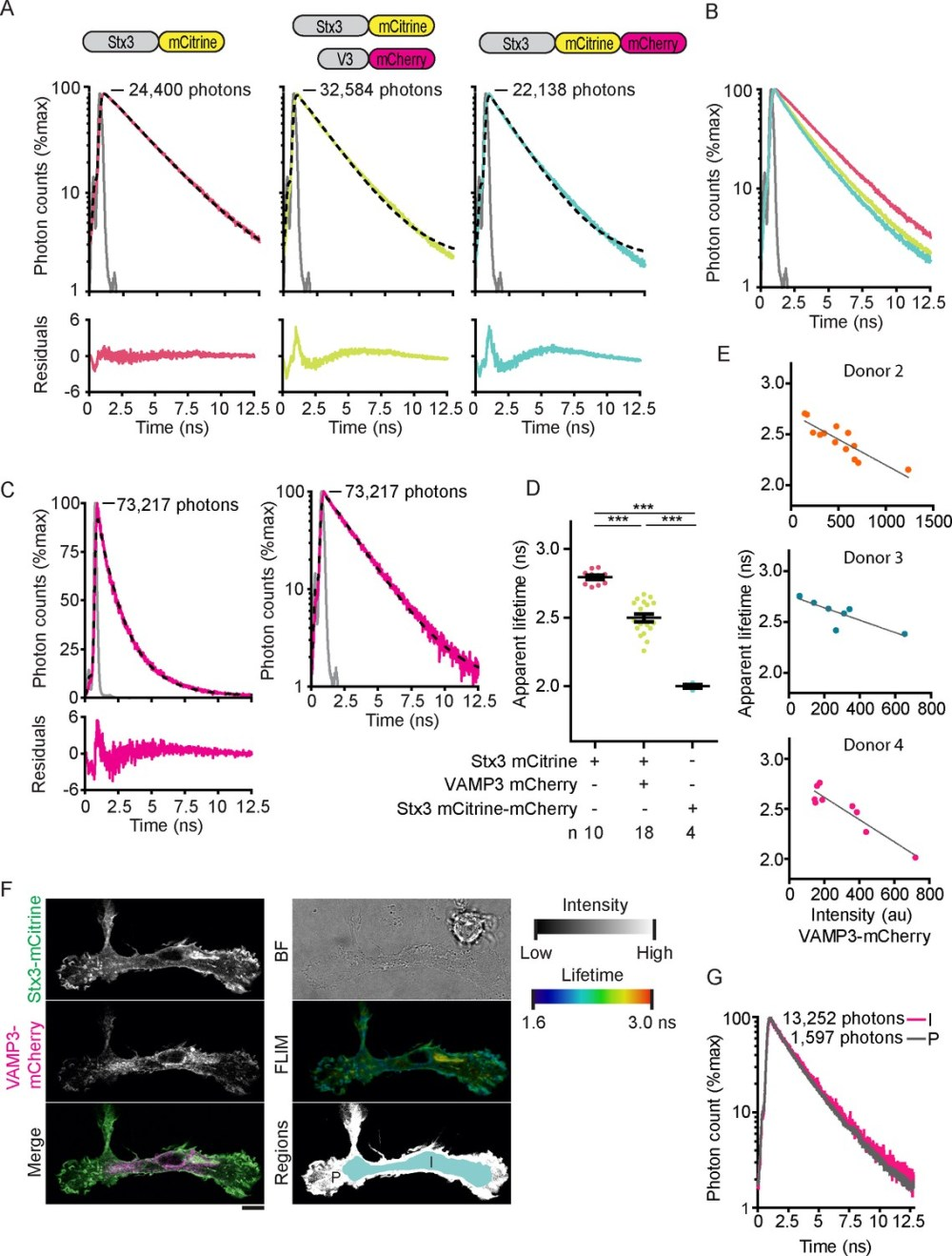 medium resolution of fluorescence lifetime histograms fitted with mono exponential decay functions and calibration of flim setup