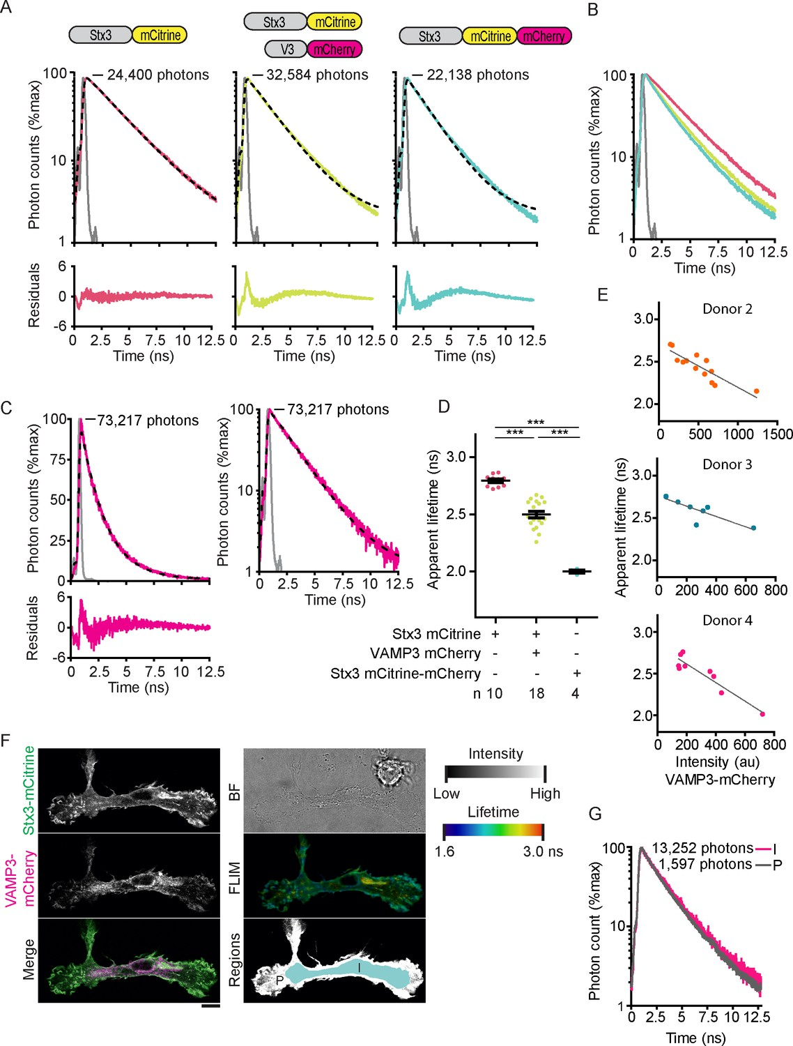 hight resolution of fluorescence lifetime histograms fitted with mono exponential decay functions and calibration of flim setup