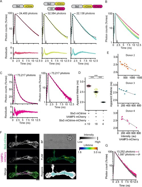 small resolution of fluorescence lifetime histograms fitted with mono exponential decay functions and calibration of flim setup