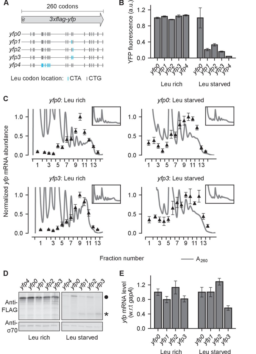 medium resolution of effect of ribosome stalling on measured protein level mrna level and polysome occupancy