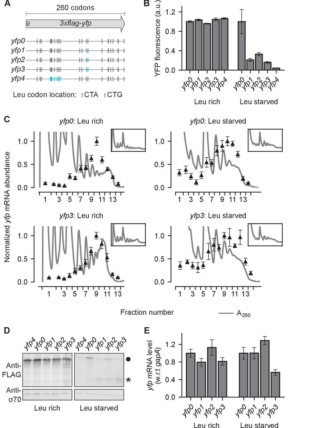 hight resolution of effect of ribosome stalling on measured protein level mrna level and polysome occupancy
