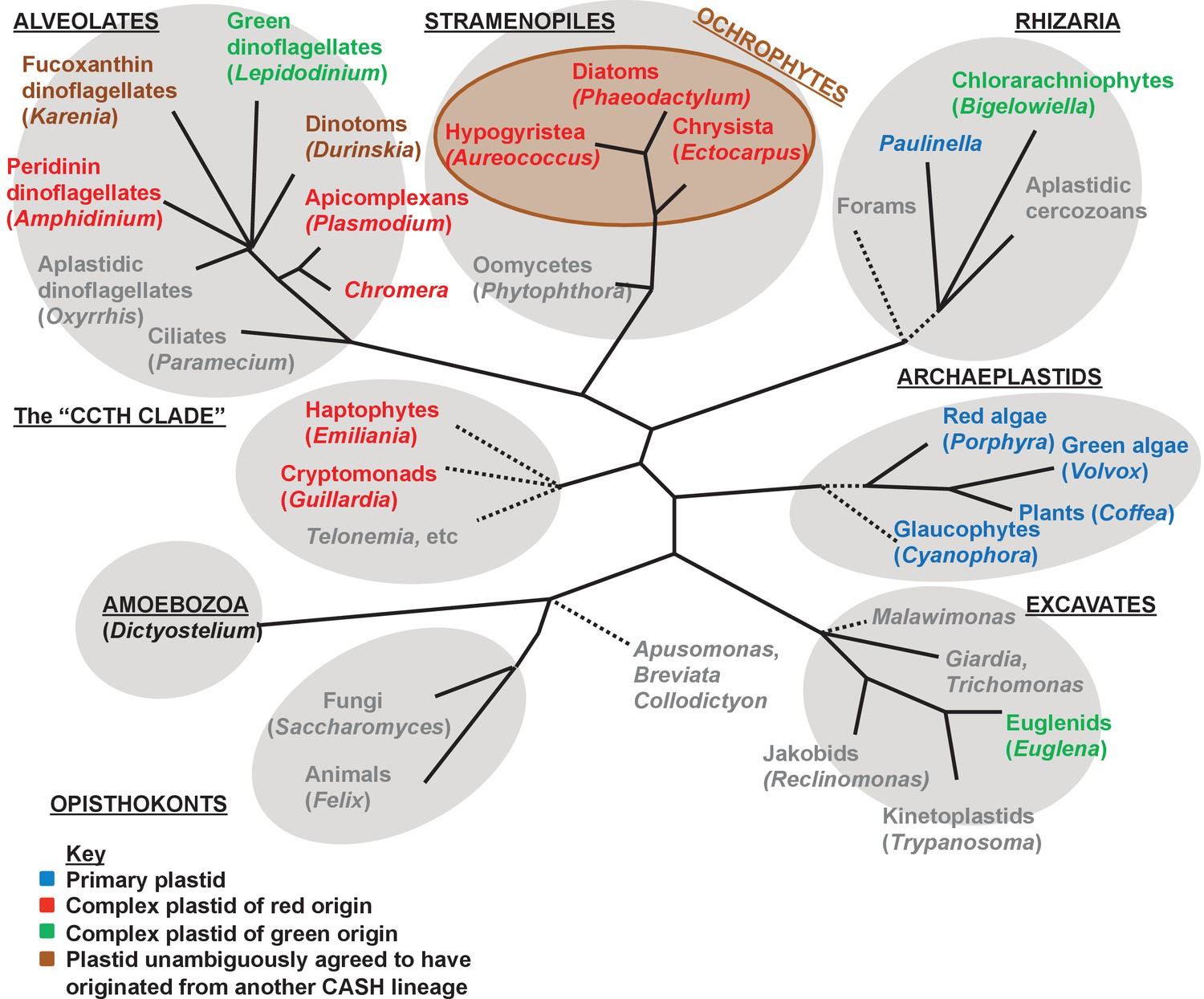 hight resolution of overview of eukaryotic diversity