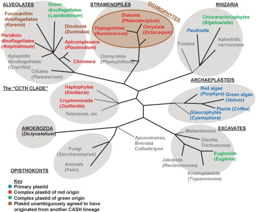 small resolution of overview of eukaryotic diversity
