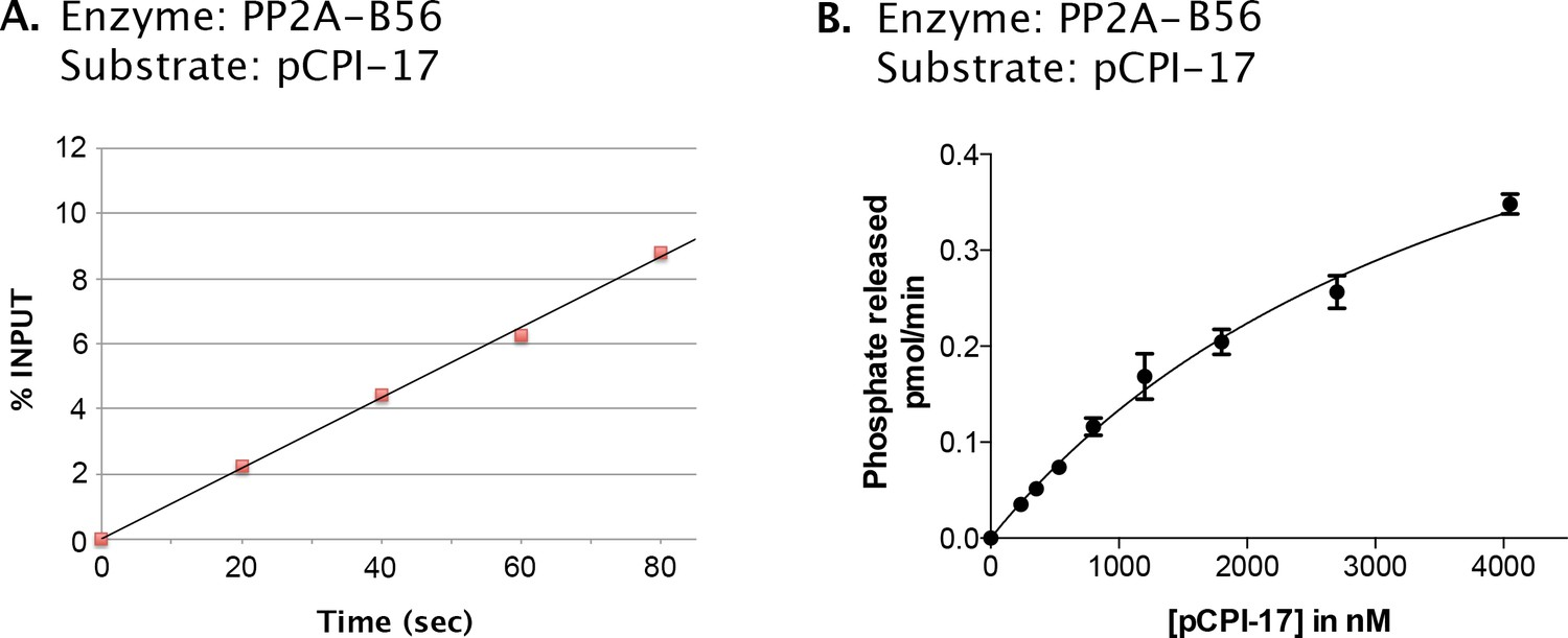 hight resolution of kinetic analysis of the dephosphorylation of pcpi 17 by pp2a b56 a candidate ppu enzyme