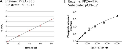 small resolution of kinetic analysis of the dephosphorylation of pcpi 17 by pp2a b56 a candidate ppu enzyme