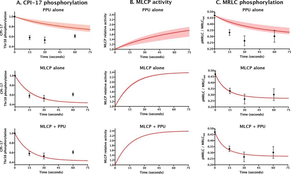 medium resolution of comparing models for aorta relaxation upon application of vasodilator