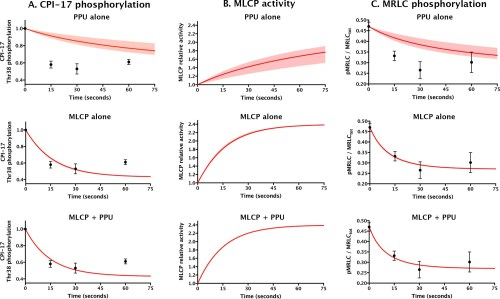 small resolution of comparing models for aorta relaxation upon application of vasodilator